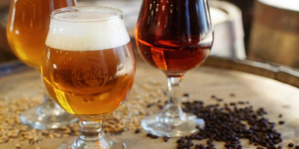 Drinking beer helps in preventing health issues
